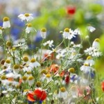 seasonal allergies and acupuncture